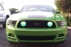 Mustang-boss
